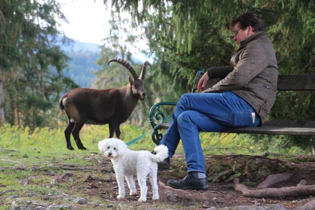 Hund und Steinbock mit Besucher - im Tierpark sind Hunde an der Leine erlaubt