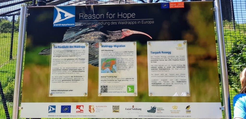 Artenschutz Information Waldrappen Österreich Wildtierpark Rosegg
