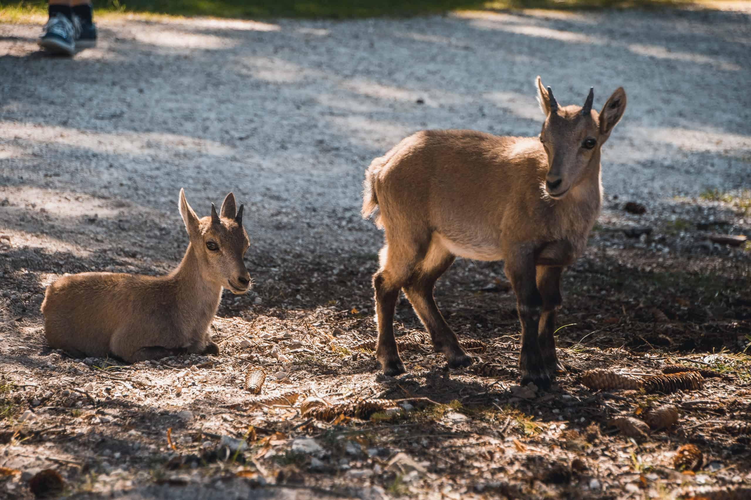 Tiere im Zoo Rosegg - Tierpark in Kärnten