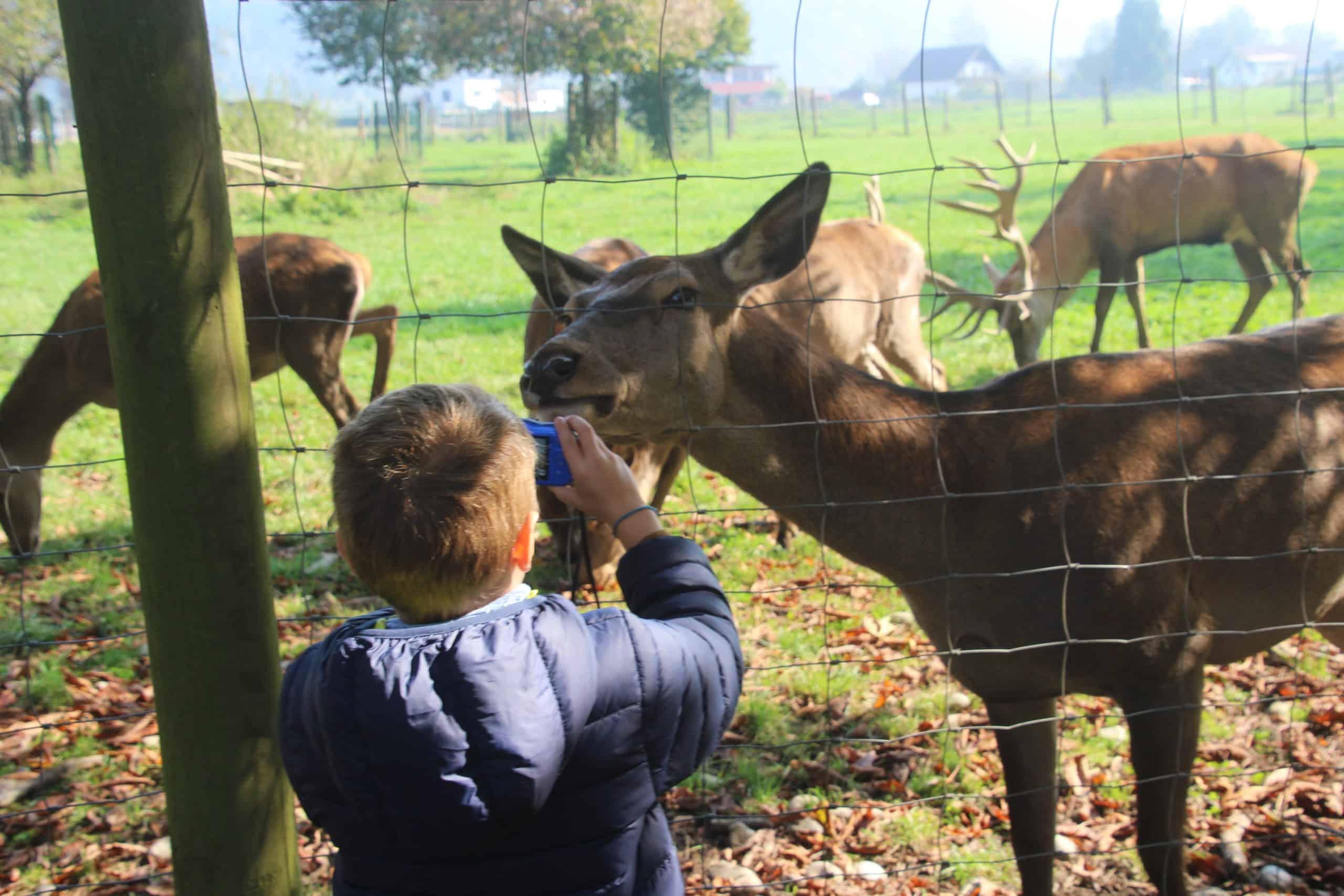 Kind bei Ausflug im Tierpark mit Wild - Ausflugsziel Nähe Wörthersee in Kärnten