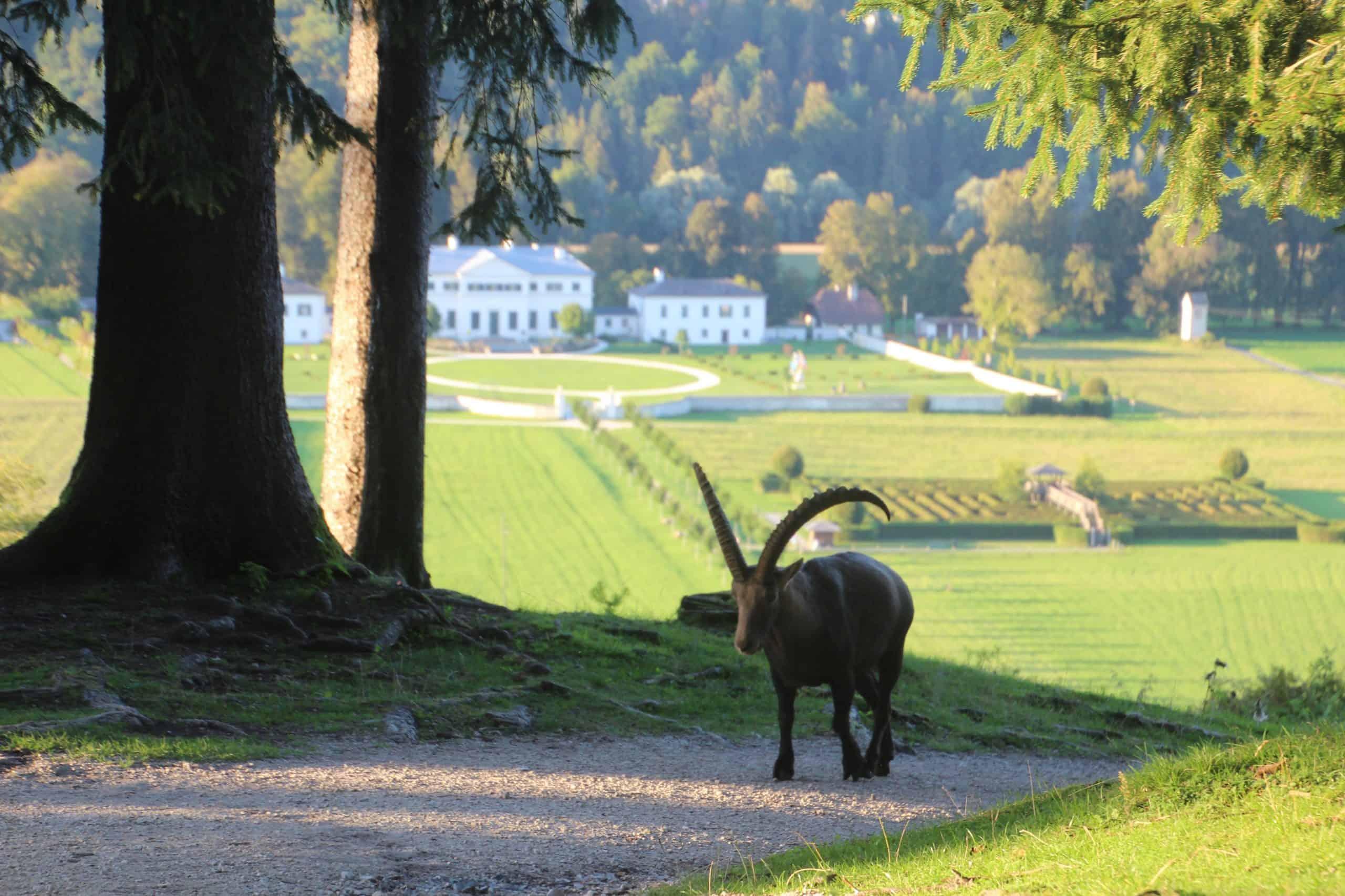 Tierpark Rosegg Ausflugsziel mit Schloss in Kärnten