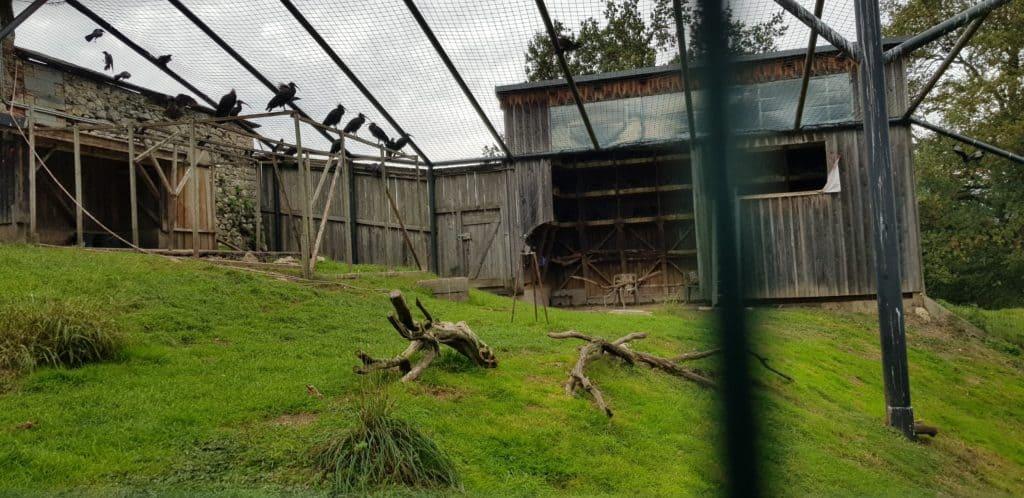 Ibis Waldrappen im Tierpark Rosegg bei Vogelschutz-Projekt