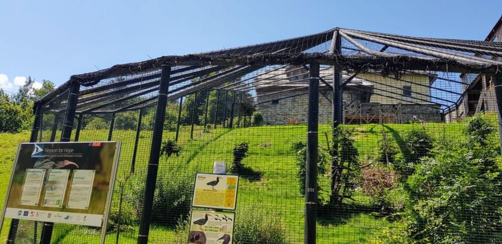 Voliere Waldrappen im Tierpark Rosegg - Kärnten