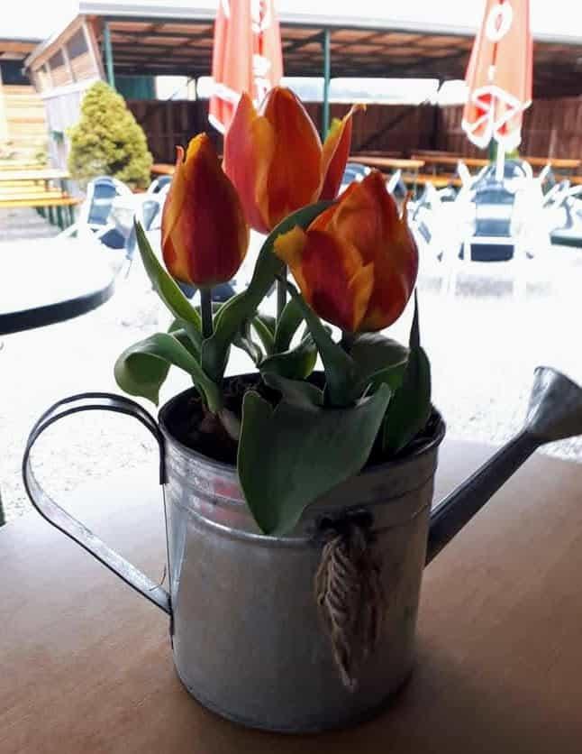 Blumen im Tierparkbuffet