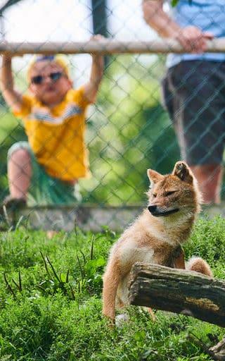 Familie mit Kind im Tierpark Rosegg Nähe Wörthersee in Kärnten bei Schakal Gehege