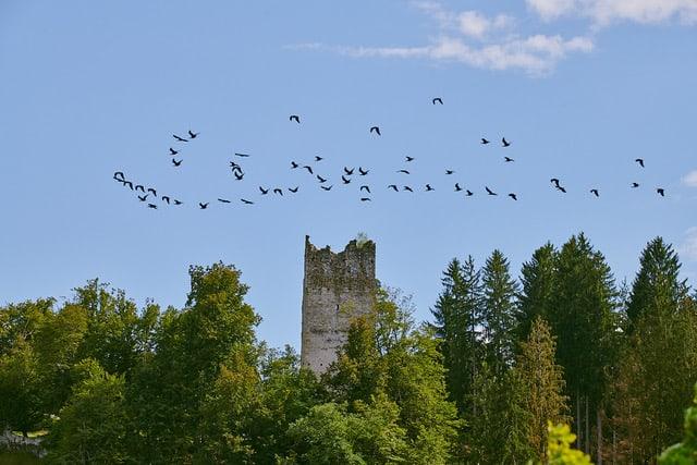 Ruine mit Vögel