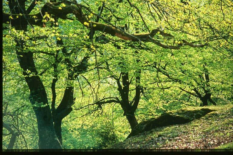 Wald Wildpark Kärnten