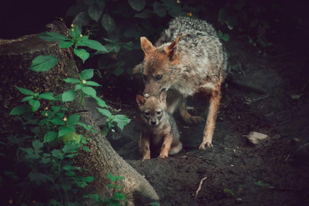 Tiere im Wildtierpark Rosegg