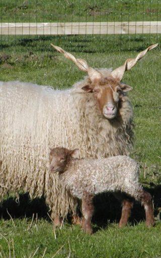 Tiere im Kleintierzoo des Wildtierparks Rosegg Nähe Wörthersee in Kärnten