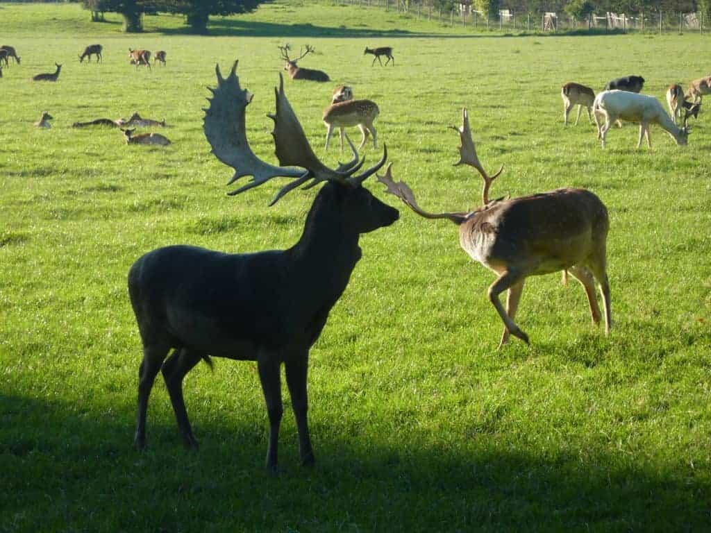Hirsche Zoo Rosegg Kärnten